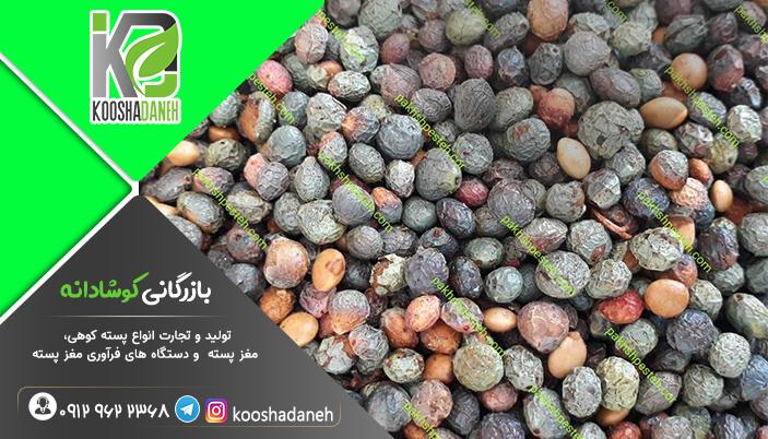 خرید پسته کوهی شیراز